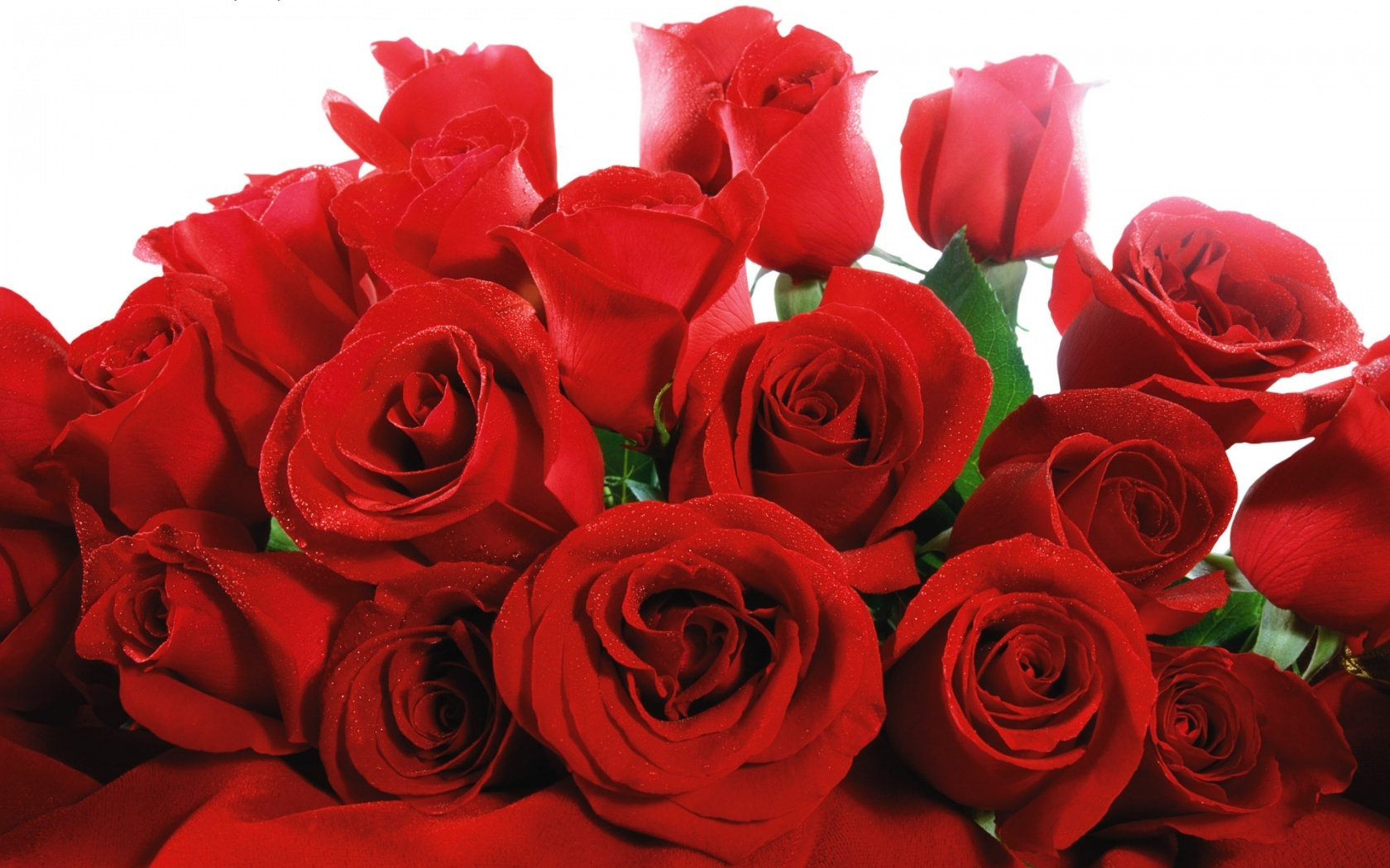 Image result for Wonderful red roses